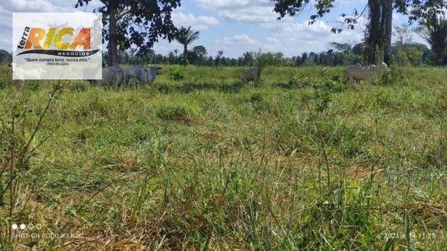 Fazenda a venda, com 129 hectares, no distrito de Triunfo/RO - Foto 16