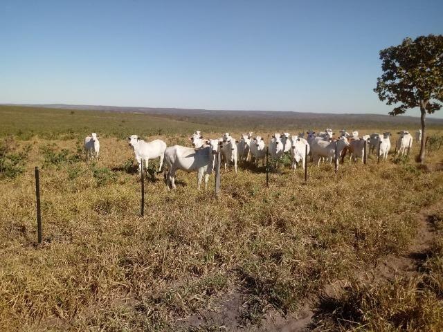 Fazenda com 1.940 hectares na estrada do manso ha 45 km de Cuiabá