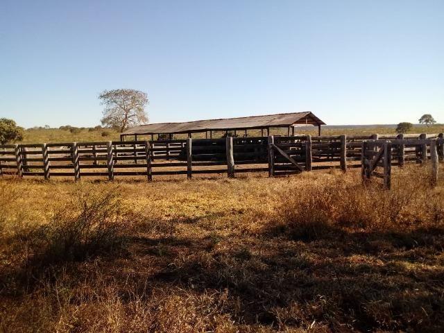 Fazenda com 1.940 hectares na estrada do manso ha 45 km de Cuiabá - Foto 14