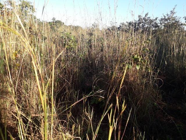 Chácara de terra boa a 9 km de Acorizal - Foto 19