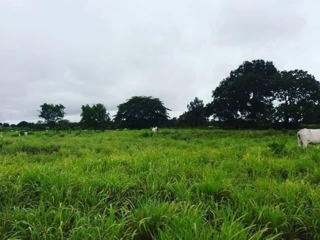 Fazenda Estilo pousada muito top em Livramento com piscina, muito pasto, represas e lago - Foto 3