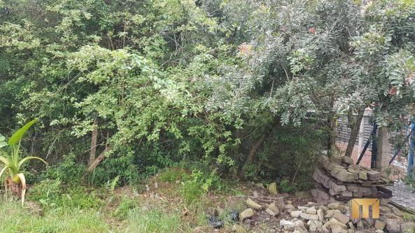 Terreno à venda em Bela vista, Caxias do sul cod:459 - Foto 9