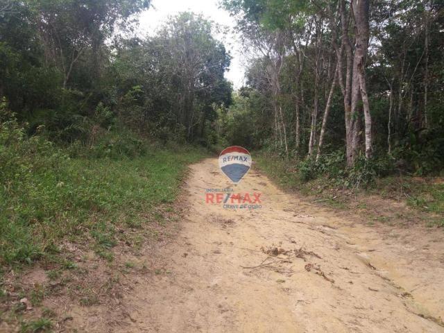 Re/max chave de ouro vende fazendas nas margens do rio buranhém - Foto 7