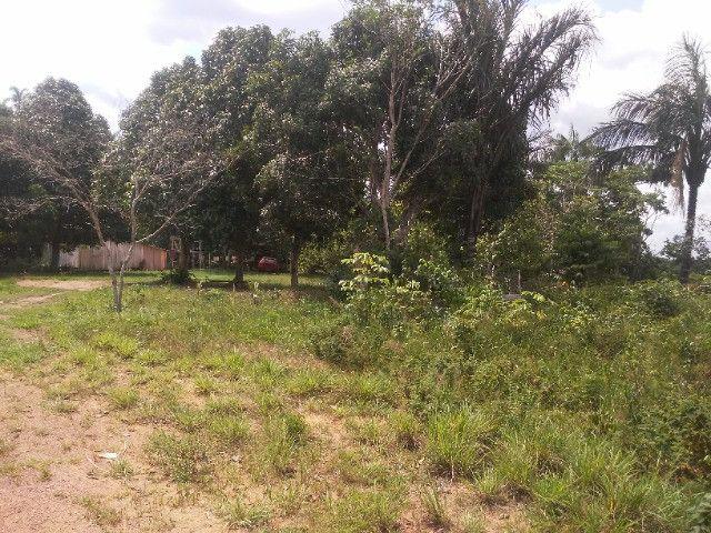 Vendo ou troco por casa em Manaus um sitio na AM010 KM 127. Mais 10KM ramal - Foto 17