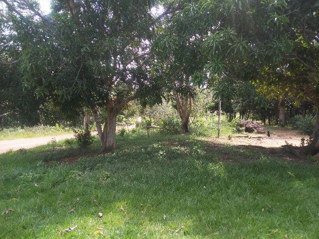 Vendo ou troco por casa em Manaus um sitio na AM010 KM 127. Mais 10KM ramal - Foto 12