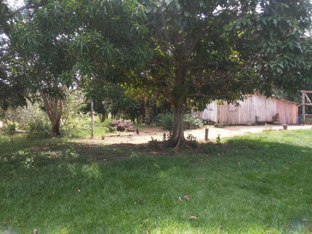Vendo ou troco por casa em Manaus um sitio na AM010 KM 127. Mais 10KM ramal - Foto 6