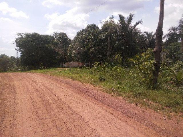 Vendo ou troco por casa em Manaus um sitio na AM010 KM 127. Mais 10KM ramal - Foto 4