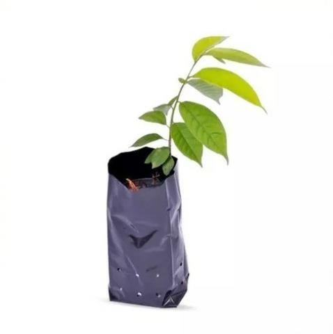 Saco Plástico Para Mudas De Plantas - Foto 2