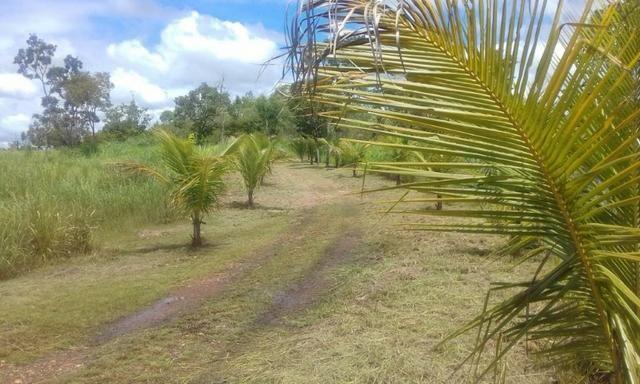Chacara a venda a 20km de Cuiaba - Foto 7
