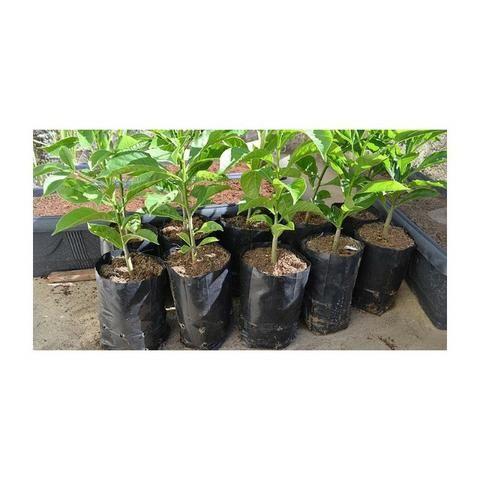 Saco Plástico Para Mudas De Plantas