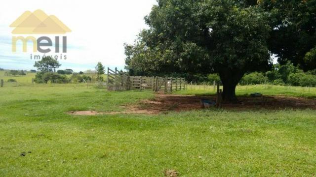 Sítio com 1 dormitório à venda, 96800 m² por R$ 590.000,00 - Zona Rural - Martinópolis/SP - Foto 15