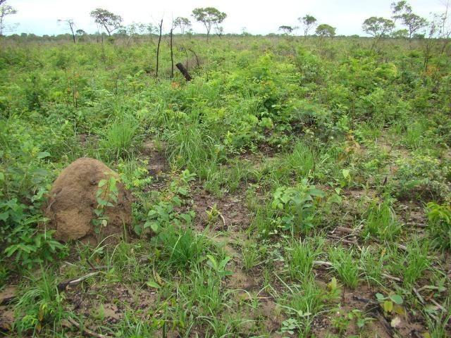 Fazenda com 1.006 hectares, com sede, aberta, para soja e milho - Foto 12