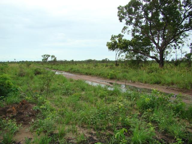 Fazenda com 1.006 hectares, com sede, aberta, para soja e milho - Foto 11