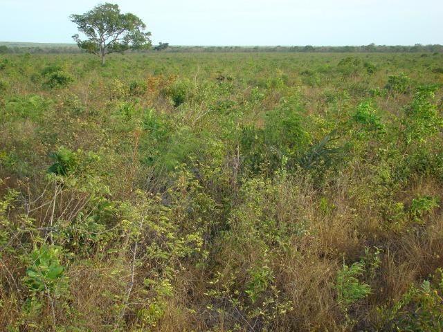 Fazenda com 1.006 hectares, com sede, aberta, para soja e milho - Foto 8