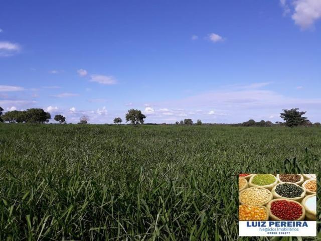 FAZENDA A VENDA DE 292 ALQUEIRÕES EM TALISMÃ - TO (Dupla Aptidão) - Foto 17