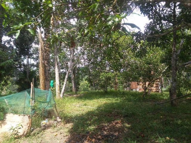Vendo ou troco por casa em Manaus um sitio na AM010 KM 127. Mais 10KM ramal - Foto 16