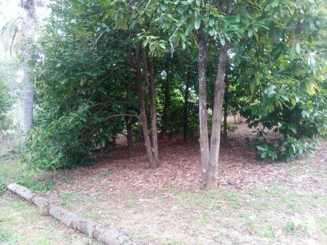 Vende-se sítio com casa, amplo espaço e inúmeras árvores frutíferas. - Foto 11