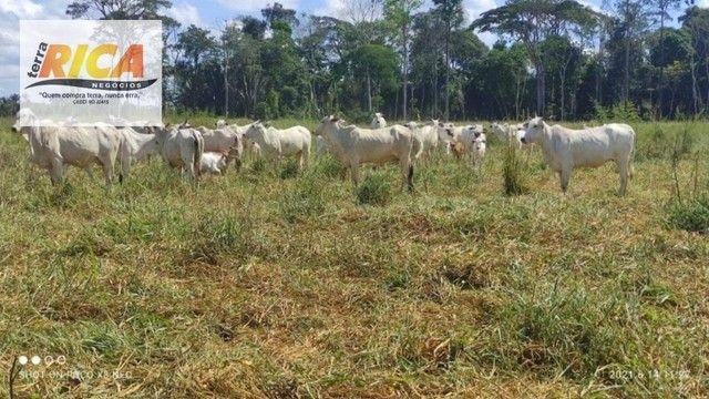 Fazenda a venda, com 129 hectares, no distrito de Triunfo/RO - Foto 11