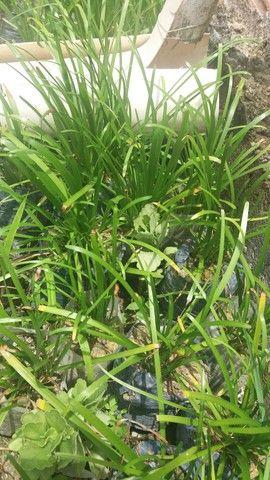 Plantas variadas a negociar - Foto 4