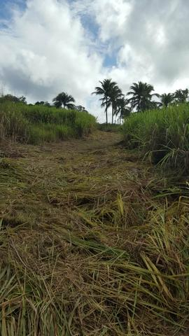 25 hectares documentado por 160 mil reais zap * - Foto 3
