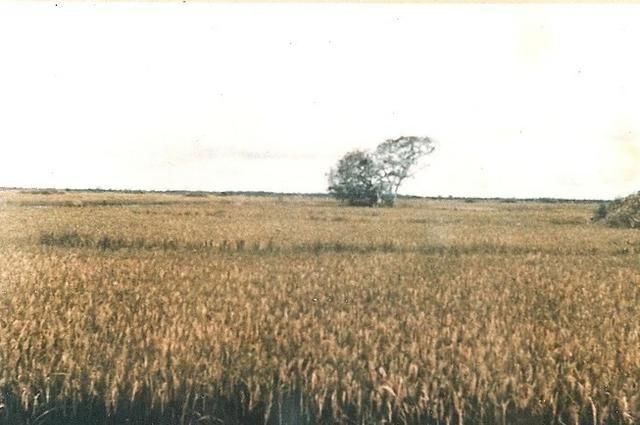 Vendo uma fazenda de 10.257 hectares, em Cocalinho- mt - Foto 12
