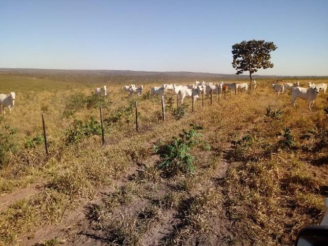 Fazenda com 1.940 hectares na estrada do manso ha 45 km de Cuiabá - Foto 9