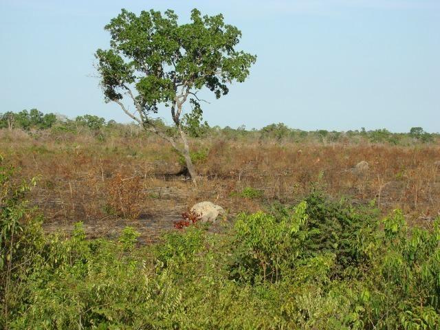 Fazenda com 1.006 hectares, com sede, aberta, para soja e milho - Foto 14