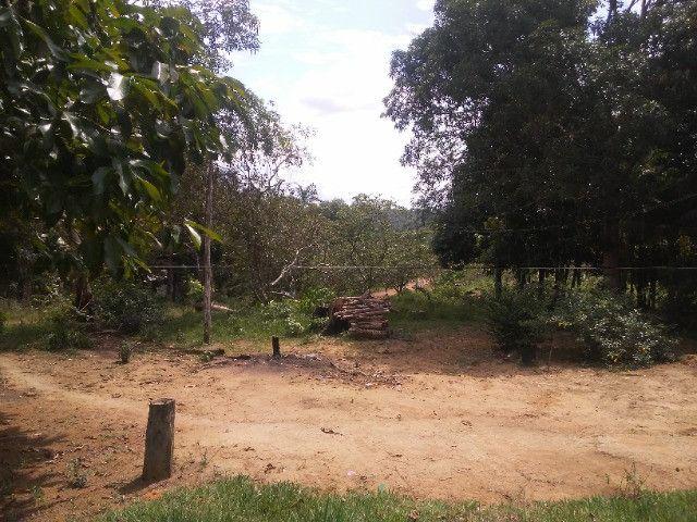Vendo ou troco por casa em Manaus um sitio na AM010 KM 127. Mais 10KM ramal - Foto 7