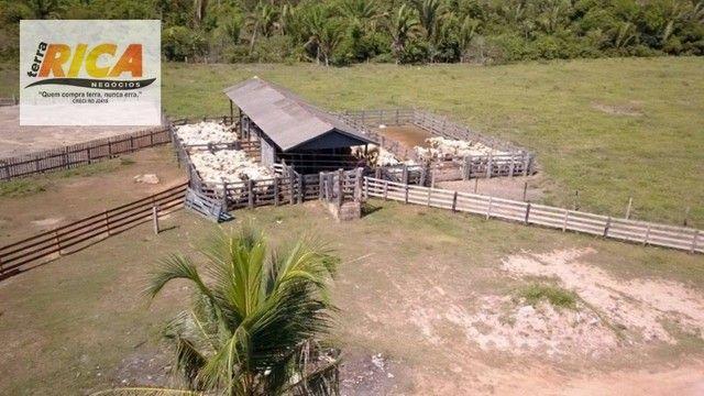 Fazenda a venda, com 129 hectares, no distrito de Triunfo/RO - Foto 3