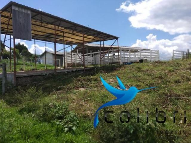 Chácara pronta para criação de gado em mandirituba - Foto 9