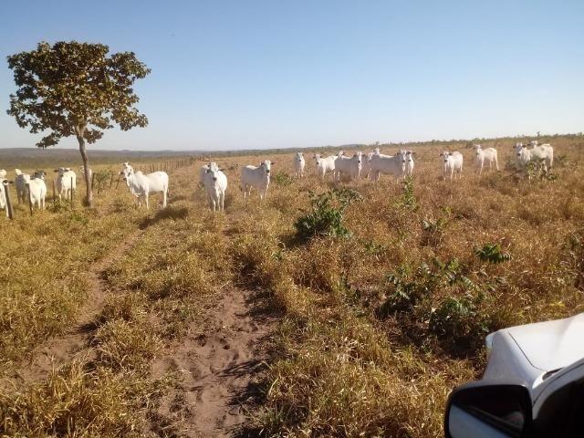Fazenda com 1.940 hectares na estrada do manso ha 45 km de Cuiabá - Foto 8