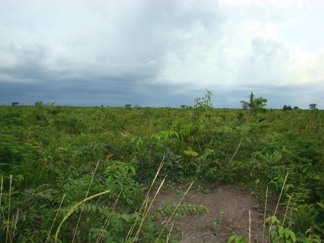 Fazenda com 1.006 hectares, com sede, aberta, para soja e milho