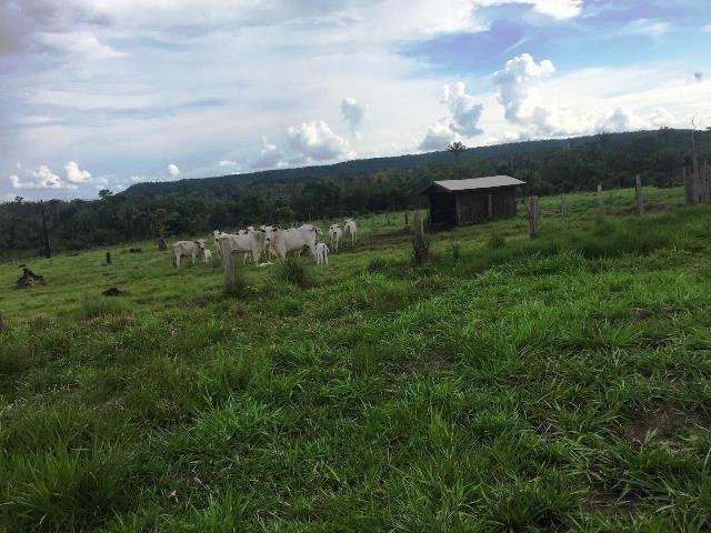 Fazenda 2.904 ha Nova Monte Verde MT - Foto 18