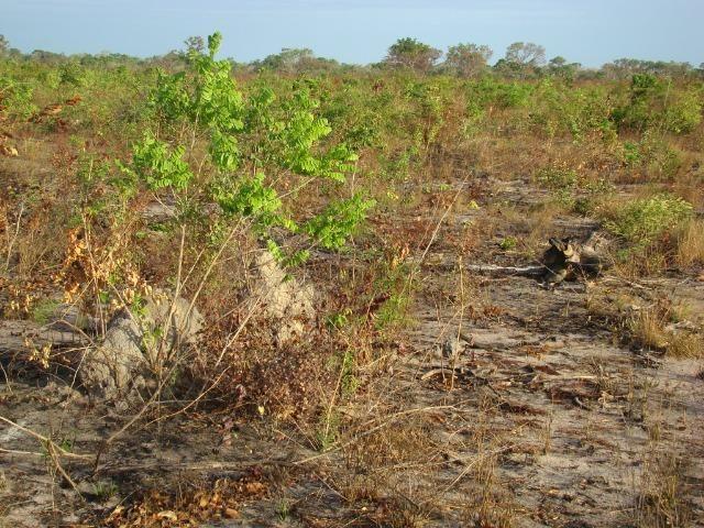 Fazenda com 1.006 hectares, com sede, aberta, para soja e milho - Foto 4