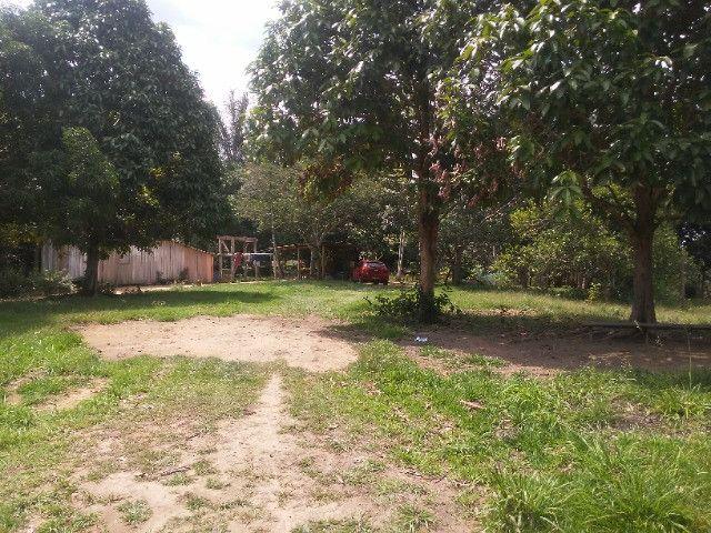 Vendo ou troco por casa em Manaus um sitio na AM010 KM 127. Mais 10KM ramal - Foto 14