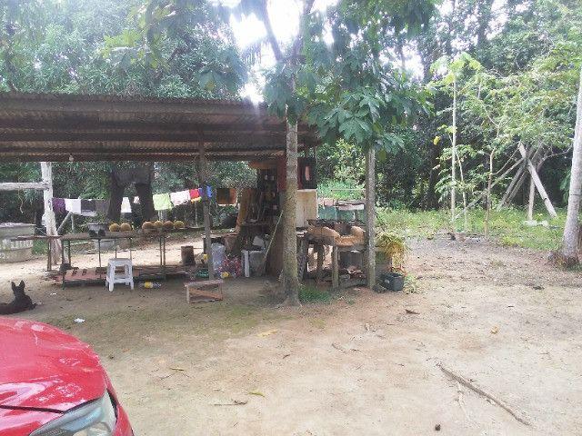 Vendo ou troco por casa em Manaus um sitio na AM010 KM 127. Mais 10KM ramal - Foto 5