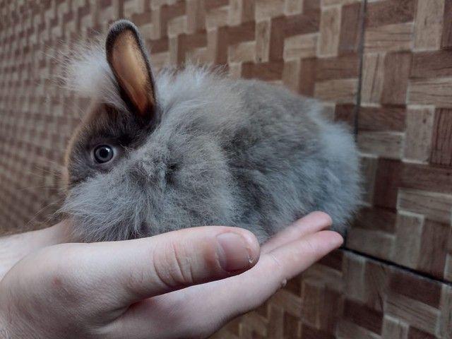 Mini coelhos fofinhos - Foto 3