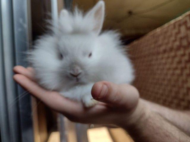 Mini coelhos fofinhos - Foto 2