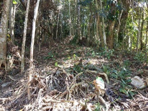 Terreno residencial à venda, Parque do Ingá, Teresópolis. - Foto 8