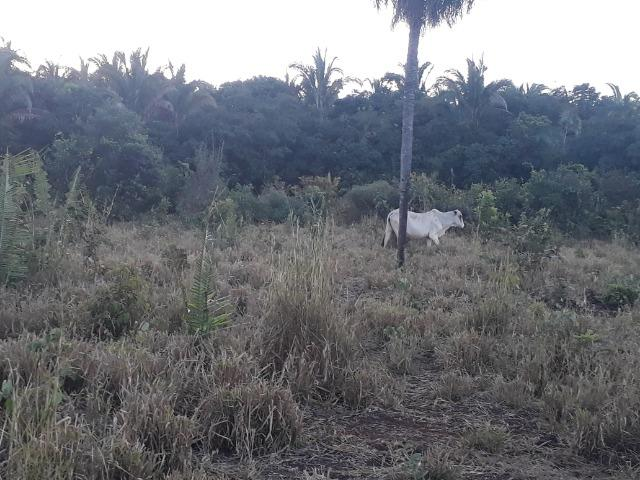 Chácara de terra boa a 9 km de Acorizal - Foto 4