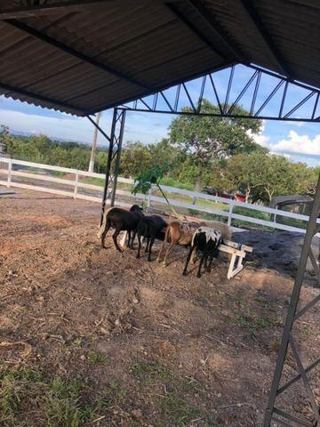 Chacara a venda a 20km de Cuiaba - Foto 10