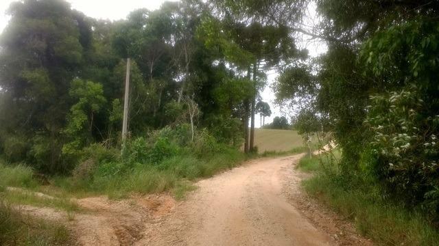 Ref. 2049 - Excelente chácara 7,5 alqueires localizada no Guajuvira - Foto 5