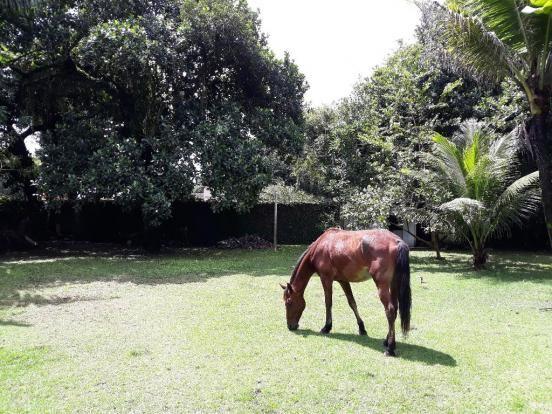 Casa à venda com 2 dormitórios em Aldeia, Camaragibe cod:ALD001 - Foto 7