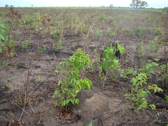 Fazenda com 1.006 hectares, com sede, aberta, para soja e milho - Foto 10