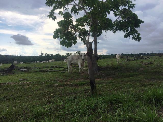 Fazenda 2.904 ha Nova Monte Verde MT - Foto 15
