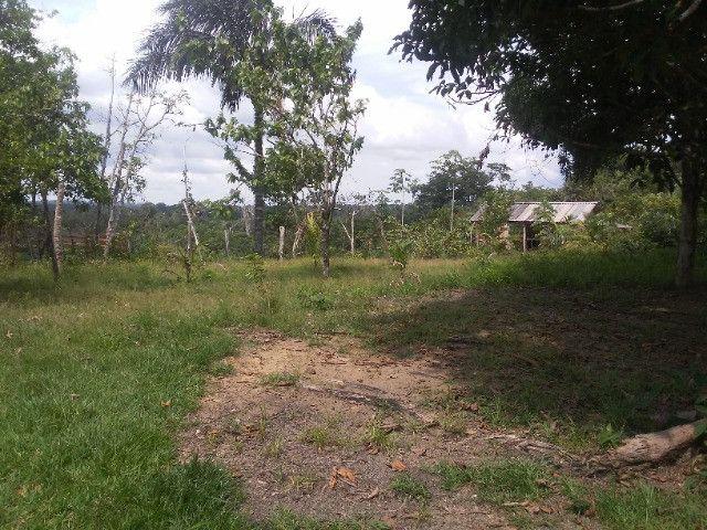 Vendo ou troco por casa em Manaus um sitio na AM010 KM 127. Mais 10KM ramal - Foto 11