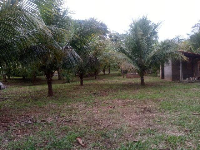 Vende-se sítio com casa, amplo espaço e inúmeras árvores frutíferas. - Foto 3