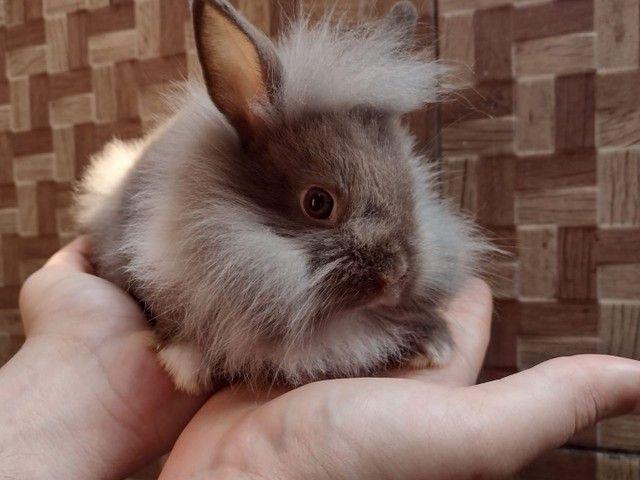 Mini coelhos fofinhos - Foto 4