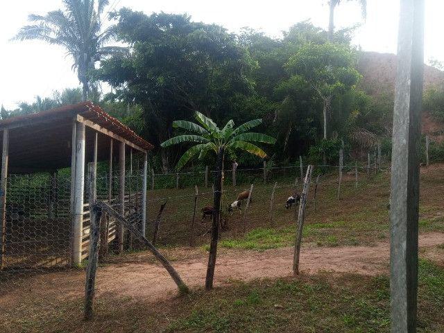 Vende-se sítio com casa, amplo espaço e inúmeras árvores frutíferas. - Foto 5