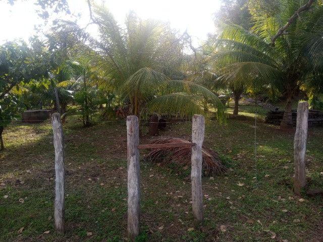 Vende-se sítio com casa, amplo espaço e inúmeras árvores frutíferas. - Foto 12
